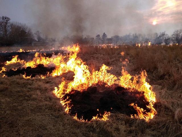 Поджигателя сухой травы выявили пожарные ЕАО