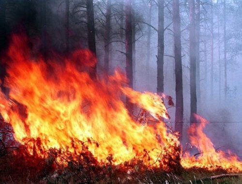 Биробиджанцы задыхаются от дыма лесных пожаров
