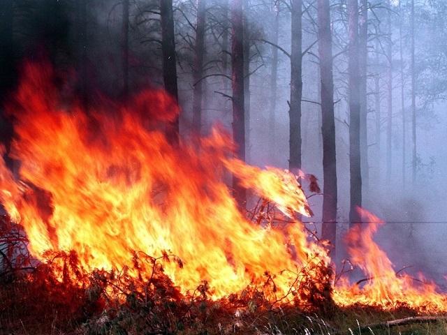 В заповеднике «Бастак» ЕАО бушует лесной пожар