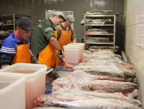 «Рыбная компания» планирует осваивать зарубежные рынки сбыта