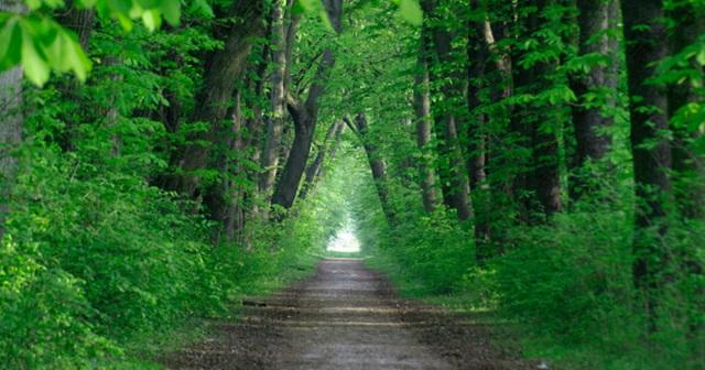 «Зеленый щит» предлагают создать в Биробиджане