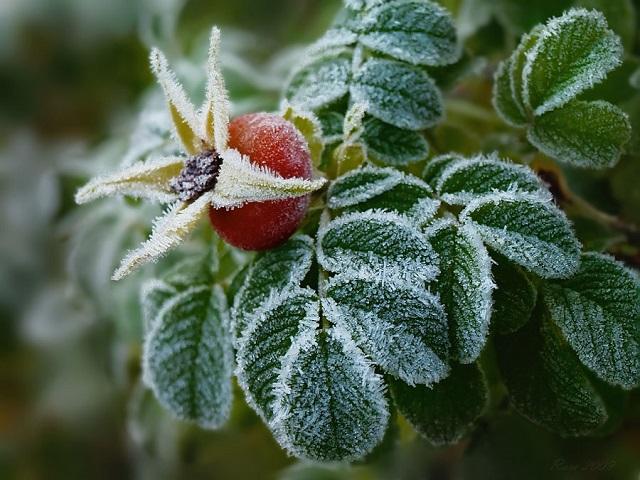 В Биробиджане ожидаются заморозки