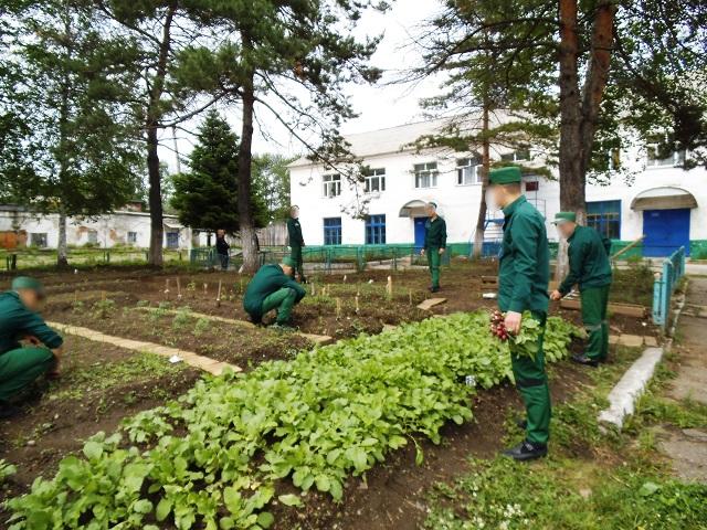 Навыки овощеводства осваивают осужденные Биробиджанской воспитательной колонии