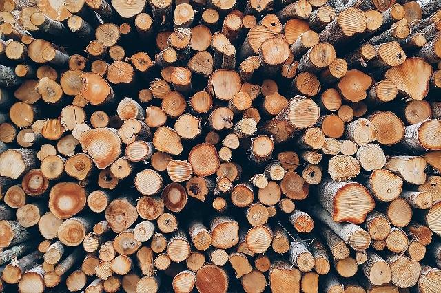 В ЕАО принят закон о пунктах приема и отгрузки древесины