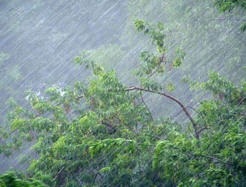 Сильные дожди и усиление ветра ожидаются ночью в ЕАО