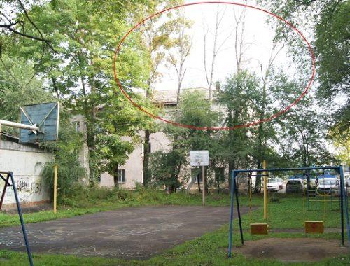 Сухие деревья могут упасть на детскую площадку в любой момент