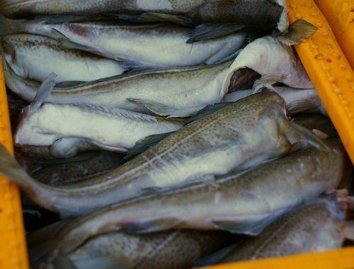 Россельхознадзор запретил ввоз некоторых видов рыбы из Китая