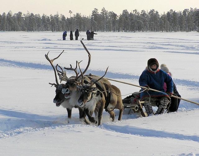 «Переголосовали»: в Госдуме решили повысить пенсионный возраст для народов Крайнего Севера