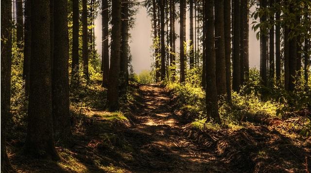 В ЕАО подросток выехал в лес для сбора кедровых шишек и не вернулся