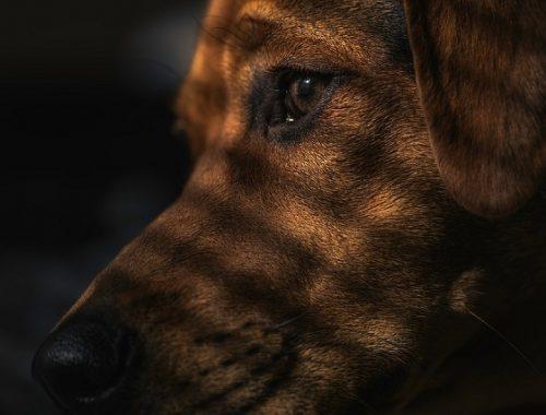 Мэрия Биробиджана возьмется за бездомных собак