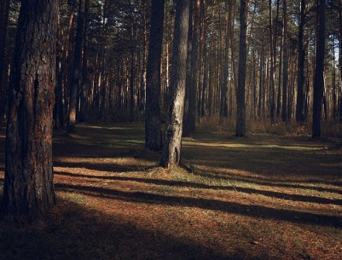 Более 70 млн рублей получит ЕАО на приобретение лесопожарной техники