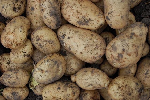 В «Росатоме» предлагают облучать продукты питания