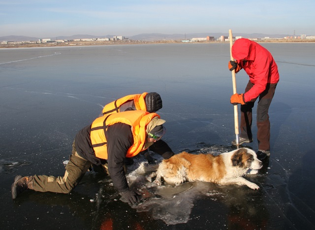 В Забайкалье спасли вмерзшую в озеро собаку