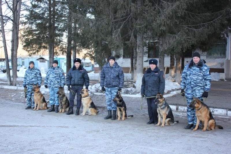 Четвероногие полицейские помогли раскрыть 11 преступлений в ЕАО