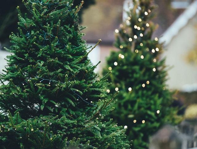 Депутат Госдумы предложил повысить пошлины на новогодние елки