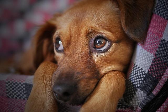 Новые законы об обращении с животными готовятся в ЕАО