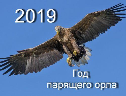 С наступающим годом Парящего Орла!