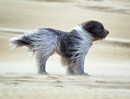 В ЕАО ожидается усиление ветра до 20 м/с