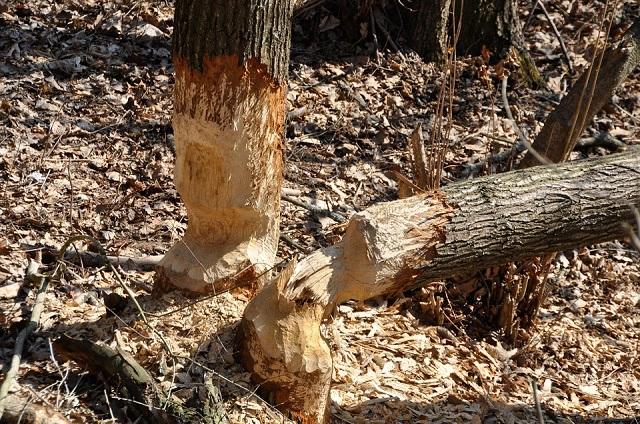 «Черных лесорубов» разыскивают в ЕАО