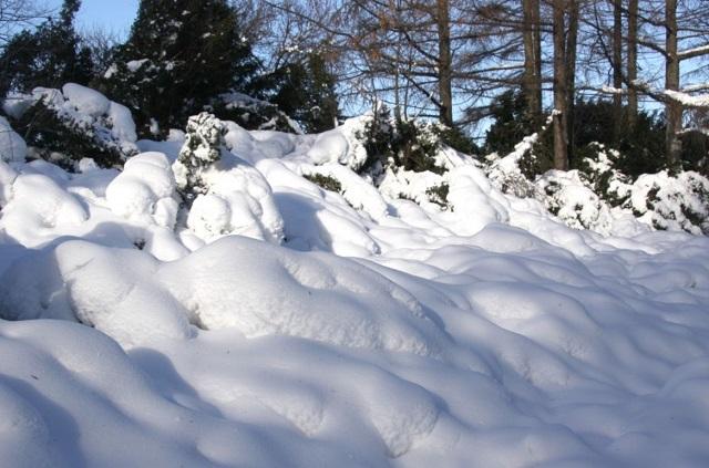 Биробиджанка уснула в сугробе в новогоднюю ночь