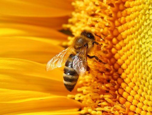 Общественная организация пчеловодов создана в ЕАО