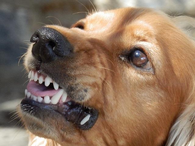 Из-за бродячих собак глава района в ЕАО оказался в суде