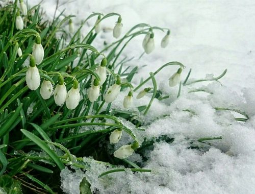 Снег еще посетит ЕАО: прогноз погоды на апрель