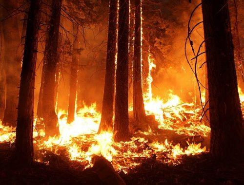 Огонь бушует в заповеднике «Бастак»