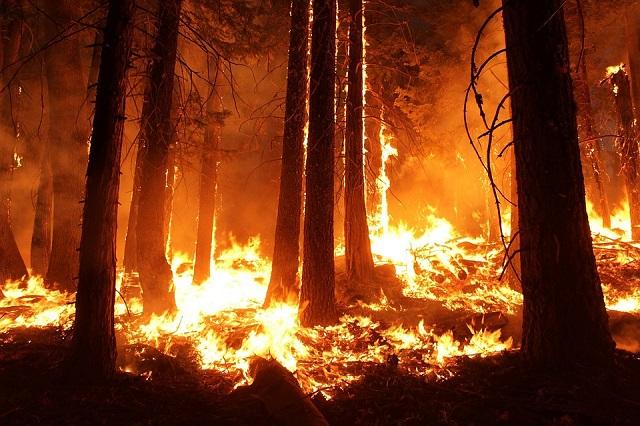 Пожары в ЕАО охватили 60 гектаров лесного фонда