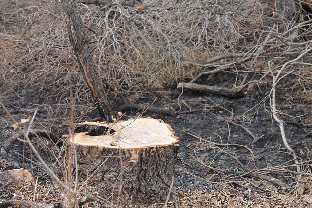 Массово рубят лес в с. Камышовка ЕАО