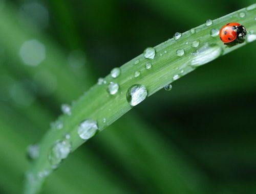 Дождливым будет май в ЕАО