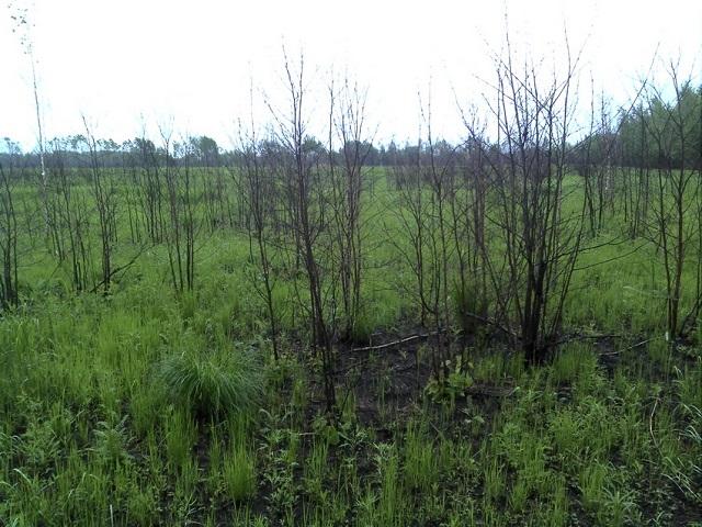 Бизнесмен отказался от 636 гектаров заброшенной им земли в ЕАО