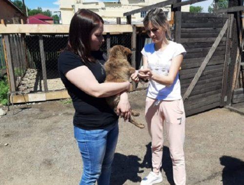 Более 30 щенков и взрослых собак в Биробиджане могут оказаться на улице