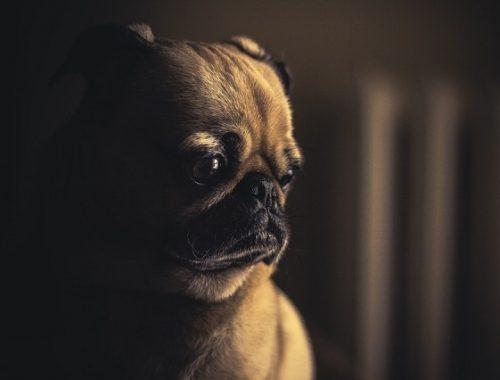 Сенаторы решили ограничить количество кошек и собак в квартирах россиян