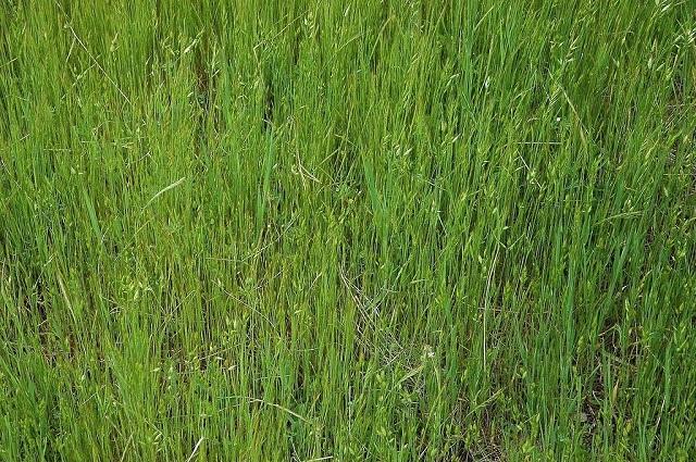 В России предложили изымать у россиян землю за мусор и нескошенную траву