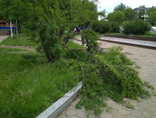 Сломанный кустарник в центре Биробиджана так и не удосужились убрать