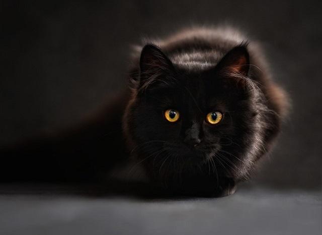 Ни капли жалости: массовую травлю кошек устроили в Биробиджане
