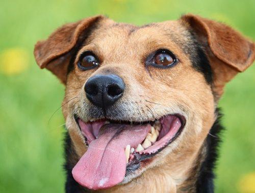 В ЕАО решили вплотную заняться проблемой выгула собак без намордника