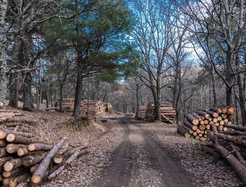 Владельцев двух лесопилок оштрафовали в ЕАО