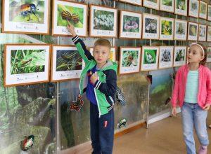 Жизнь насекомых восхитила юных биробиджанцев