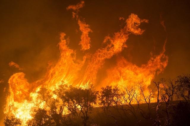 Возбуждено первое уголовное дело о пожарах в Сибири
