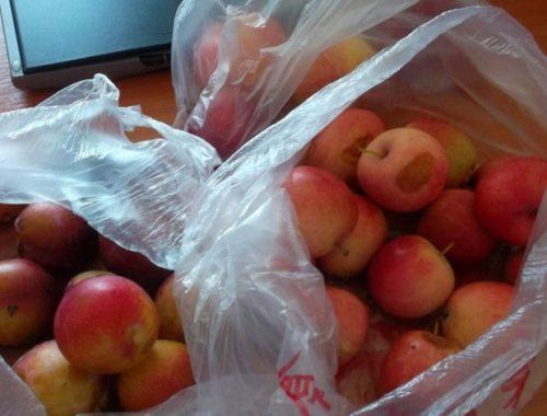 Запрещенные фрукты из Китая пять раз пытались ввезти в ЕАО