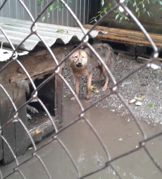 Приют для бездомных животных топит в Биробиджане
