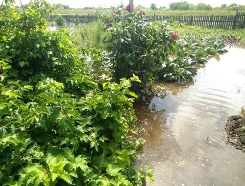 Заявления на выплату компенсации за утрату урожая принимаются в мэрии Биробиджана