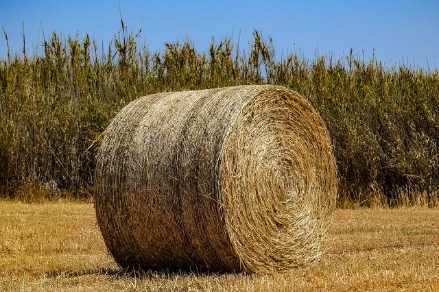 «А нам как выживать?»: фермеры ЕАО забили тревогу