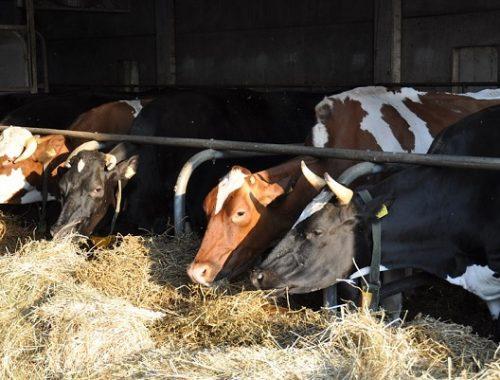 Вопросом закупки сена займется управление сельского хозяйства ЕАО