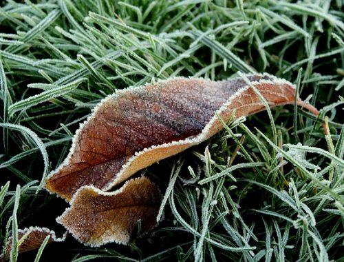 Первые заморозки ожидаются в ЕАО