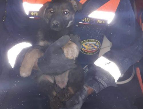На помощь застрявшему между гаражами щенку отправились спасатели ЕАО