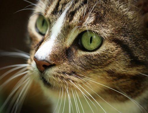 Кошка спасла жизнь семье из ЕАО