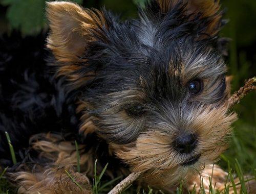 Без щенка и без денег осталась жительница ЕАО